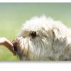 Cibo per cani Platinum Natural in omaggio