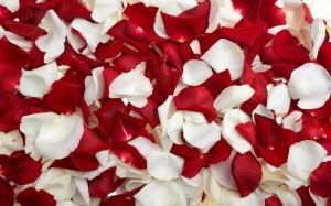 petali di rosa omaggio