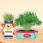 Kellog's regala kit da giardiniere per adulti e bambini